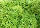 Salát - Obrázek